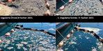 Deniz salyasıyla mücadelede yeni yöntem