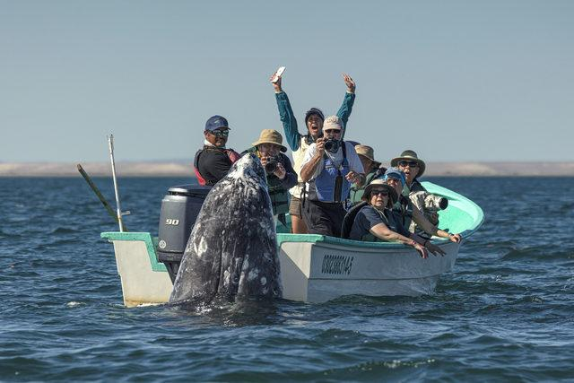CATERS_WHALE_WATCHING_002_3441589