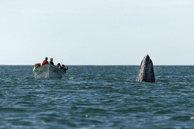 CATERS_WHALE_WATCHING_004_3441591