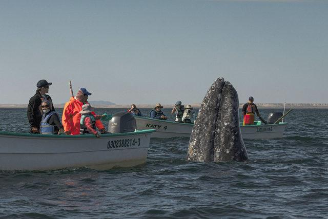 CATERS_WHALE_WATCHING_006_3441593