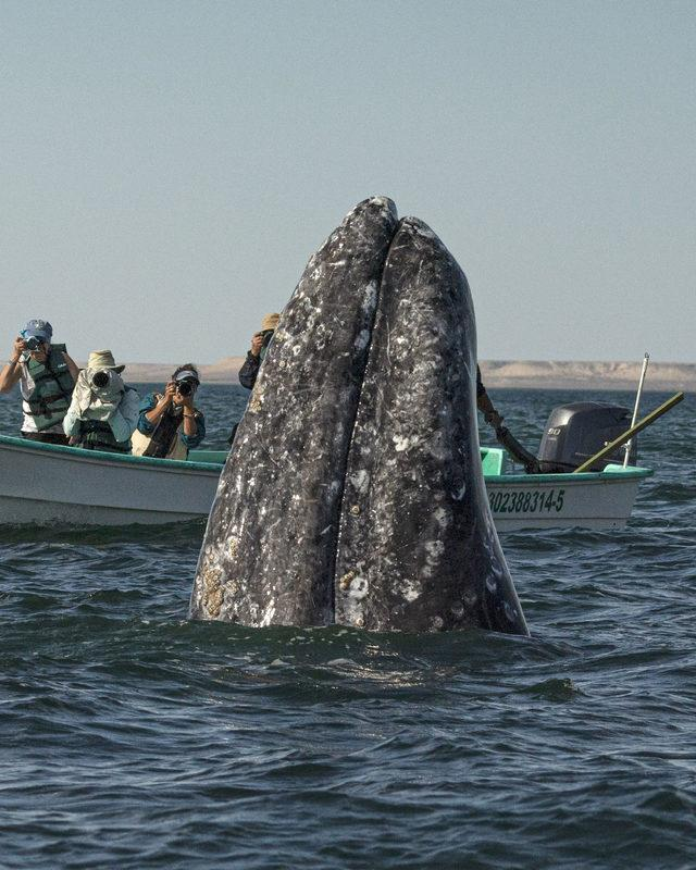 CATERS_WHALE_WATCHING_008_3441595