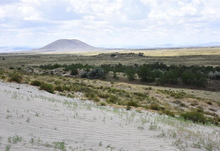 Konya'nın Karapınar ilçesindeki çölleşmeye karşı verilen mücadele sonuç verdi! Yeşeren çöl şaşkınlık yarattı