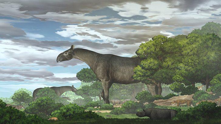 Çin'de bulunan dev gergedan fosili, 'zürafadan uzun' yeni bir türü ortaya çıkarttı