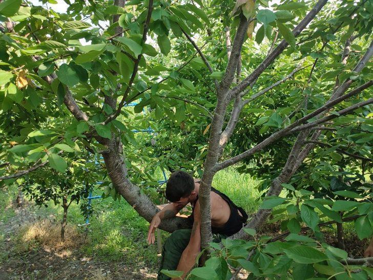 Denizli'de firari hükümlü, saklandığı kiraz bahçesinde yakalandı