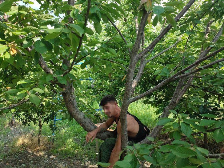 'Hızlı Gonzales' kiraz ağacında yakalandı!