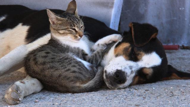 Gülümseten dostluk! Birlikte oynayıp birlikte uyuyorlar