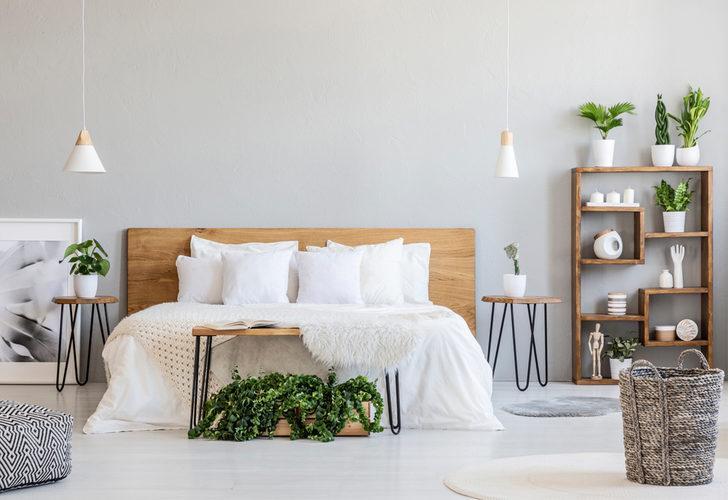 Bilinmeyen gerçek: Yatak odasında bitki bulundurmak zararlı mı? Eğer metrekare başına...