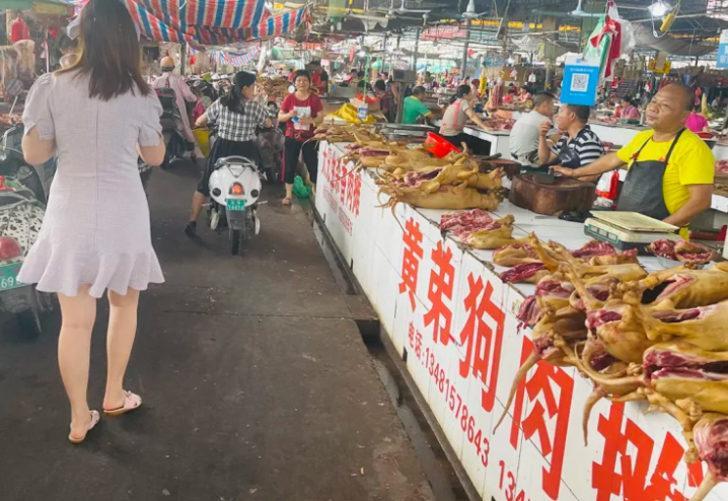 Çinliler kimseyi dinlemiyor! 60'tan fazla köpeği yemek için kamyona doldurdular