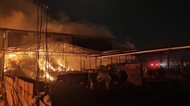 Manisa'da ağılda çıkan yangın söndürüldü