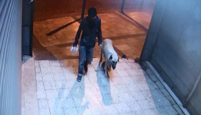 Tetikçi sapık çıktı! Sokak köpeğini öldürüp tecavüz etmiş