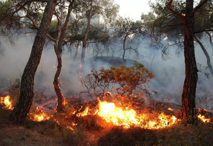 Foça'daki yangın saatler sonra kontrol altına alındı