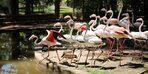 Antalya'da operasyonda ele geçirilen 21 flamingo koruma altına alındı
