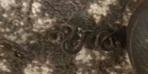 ABD'de akılalmaz olay! Yatak odasında 18 yılanla karşılaşan kadın hayatının şokunu yaşadı