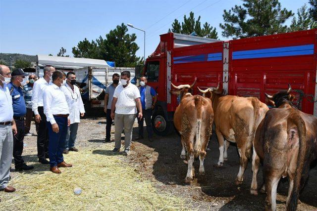 Karabük'te Kurban Bayramı öncesi canlı hayvan pazarında hareketlilik arttı