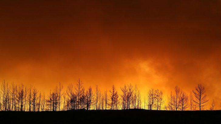 Türkiye'de yangınlar: Türk Hava Kurumu ile Tarım ve Orman Bakanlığı neden eleştiriliyor?