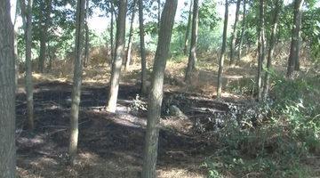 İstanbul'da ormanın yandığını gören köylüler faciayı önlemiş
