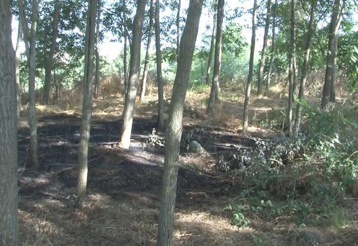 İstanbul Arnavutköy'deki ormanda da yangın faciası yaşanacaktı! Böyle durdurmuşlar