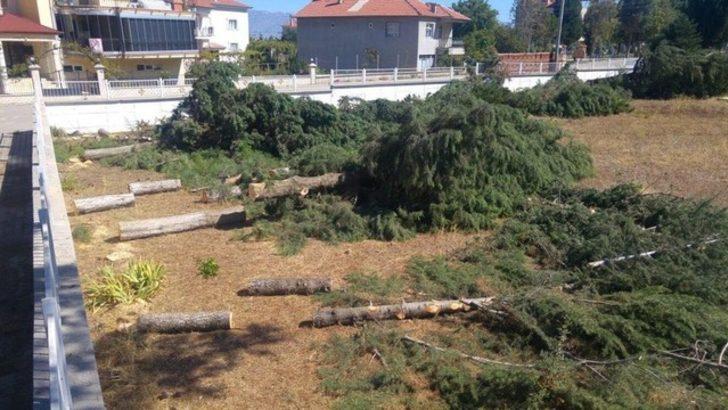 Hava tahmini için 30 ağacı kestiler!