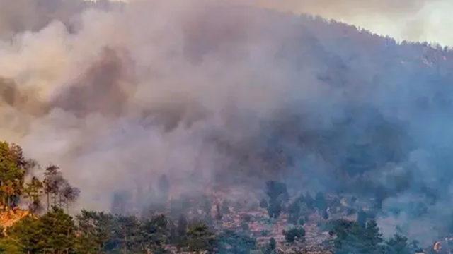 Aydın'da 2 farklı noktada orman yangını