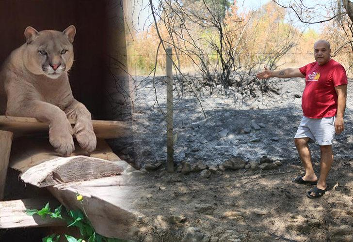 """""""Manavgat'taki yangında hayvanat bahçesindeki puma öldü"""" iddiasına açıklama"""