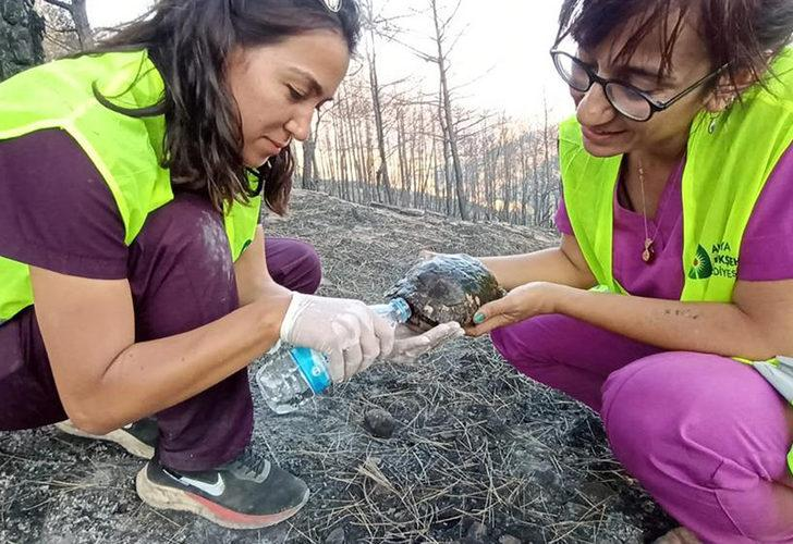 Antalya'daki yangında zarar gören hayvanların da yaraları sarılıyor