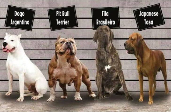 Irk köpek besleyenler dikkat! Kısırlaştırma ve kayıt zorunluluğu getirildi