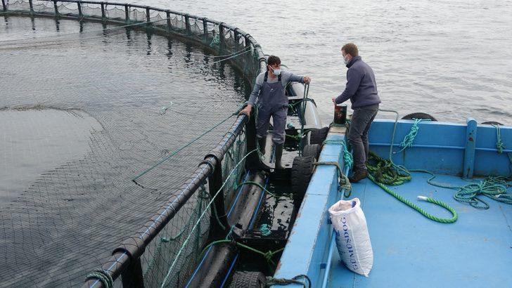 Karadeniz somonuna yurt dışından talep yağıyor! Yüzde 385 arttı