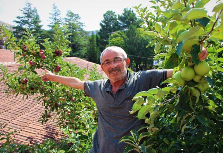 Gören şaşkına dönüyor! Bir ağaçta 6 çeşit elma yetiştirdi
