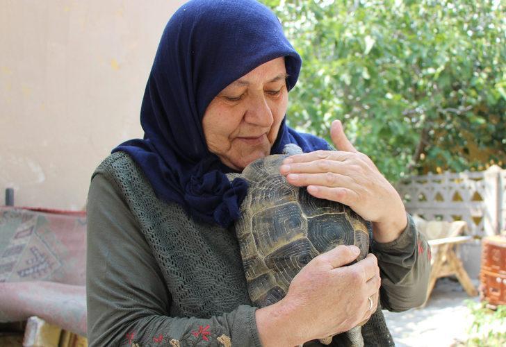 Amasyalı Zekiye teyze 15 yıldır kaplumbağa besliyor: Annem tam bir kaplumbağa terbiyecisi