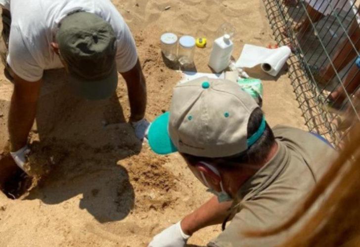 Çıkışlarını merakla beklediler! Caretta carettaların yavruları denizle buluştu