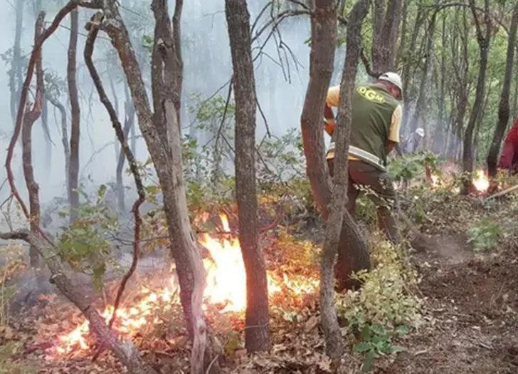 Orman Genel Müdürlüğü açıkladı: Yurt genelindeki orman yangınlarının 6'sı kontrol altında