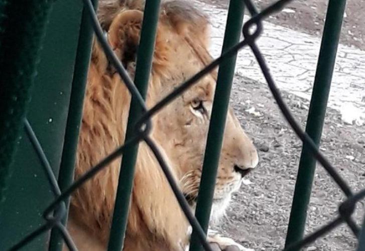 Aslanların kükrediği, maymunun kaçtığı mahallede yeni gelişme! Gazeteye ilan verip, Cumhurbaşkanı'na seslendiler