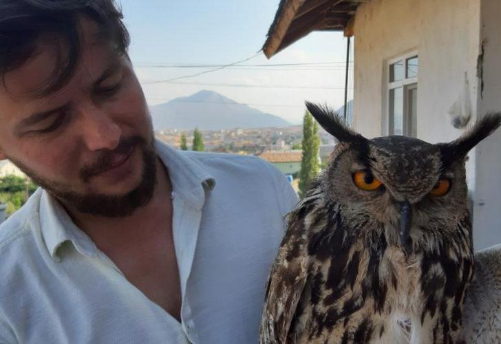 Bitkin halde bulduğu Puhu kuşunu evine getirip etle besledi: Adını Barbara koydum