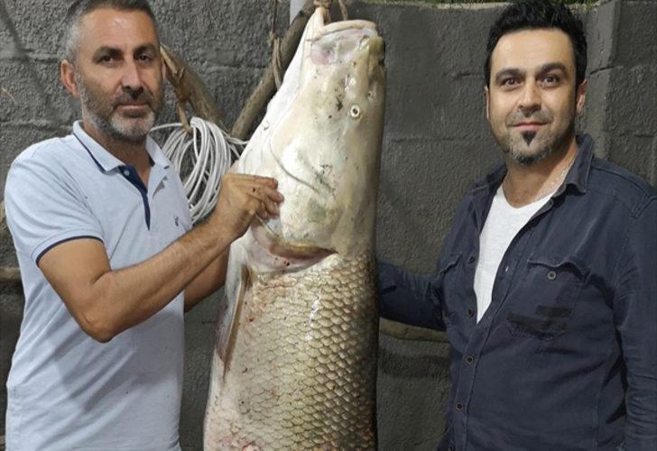 Erzincan Karasu Nehri'nde turna balığı yakalandı! 85 kilogram, 180 santimetre