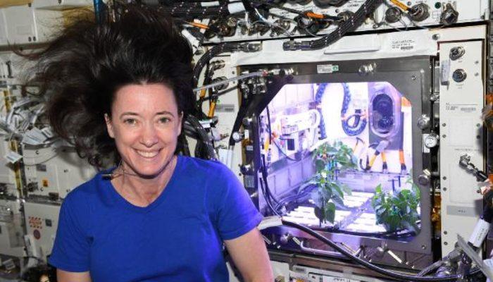 NASA astronotu duyurdu! Biber fideleri uzayda çiçek açtı