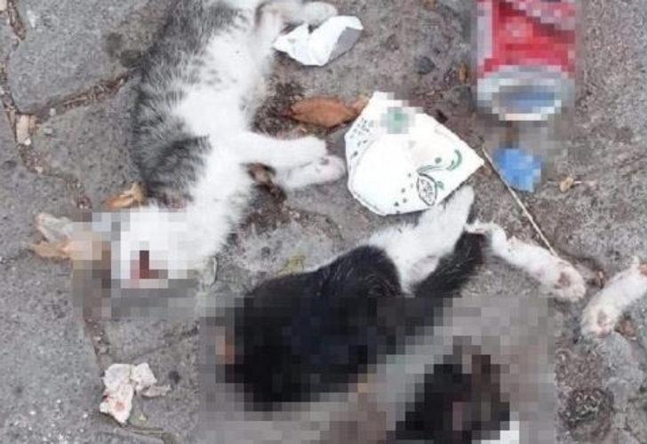 Vahşet! Giresun'da iki kedi yavrusu canice öldürüldü