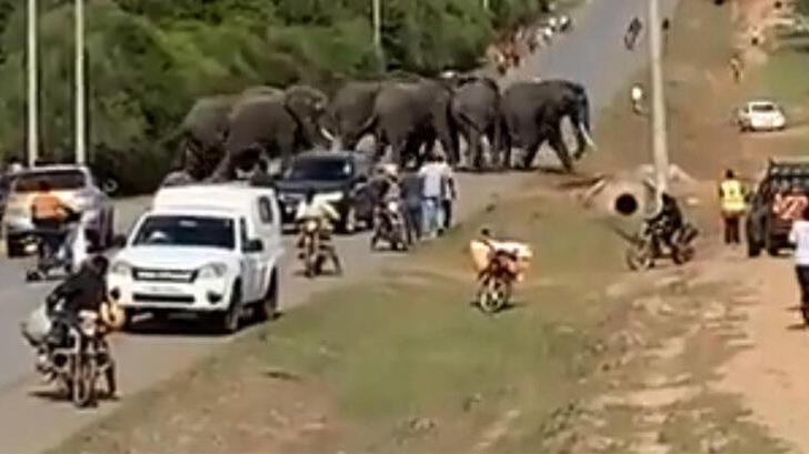 Böylesi görülmedi! Kenya'da susuz kalan filler kasabaya daldı