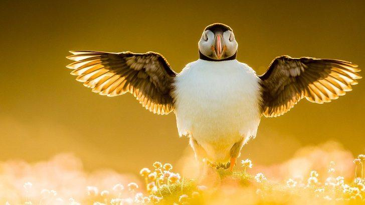 2021 Yılın Kuş Fotoğrafçısı ödülleri belli oldu