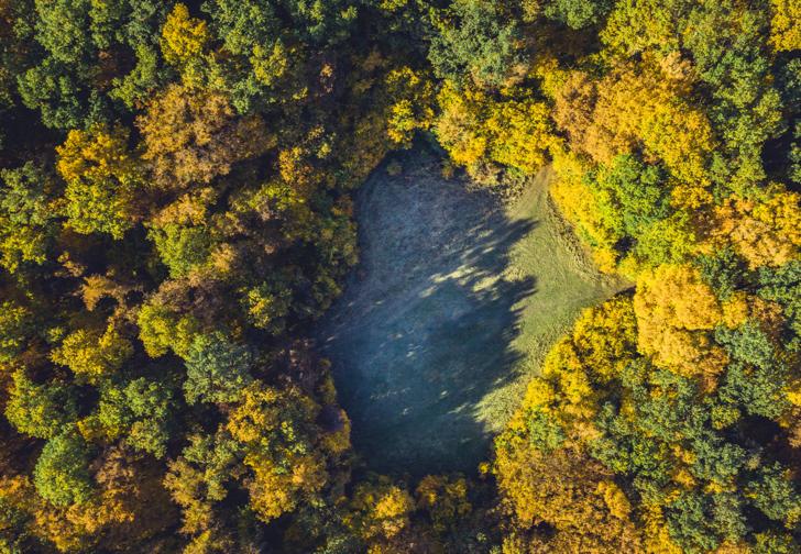 Dünyanın en gizemli yeri! Transilvanya'nın 'Bermuda Üçgeni' olarak bilinen esrarengiz ormanı: Hoia Baciu