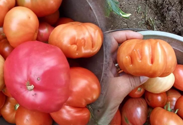 Gözü gibi bakıyor! Üzerinde 'Allah' yazısı olan domates görenleri şaşkına çevirdi