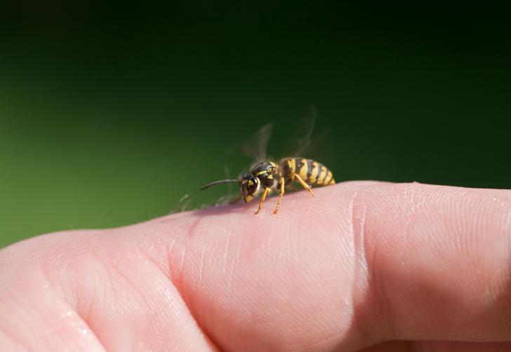 Öğrendiğinizde inanamayacaksınız! Arı sokmasından cinsel anlamda haz alma durumu: Melissofili