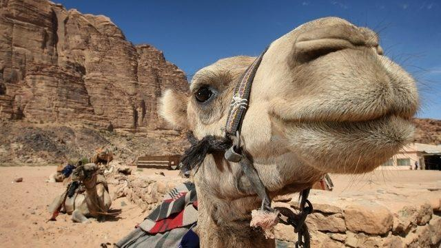 Image result for jordan country tourist attractions
