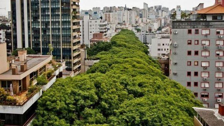 Dünyanın en güzel sokağı olduğunun kanıtı 4 fotoğraf