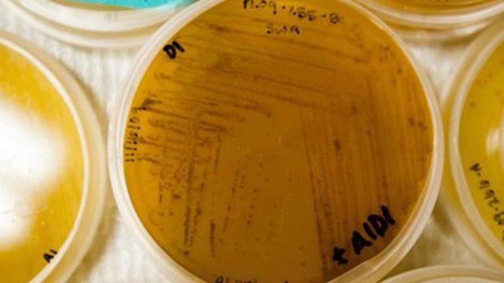 Okyanus çamurundan 'süper antibiyotik'