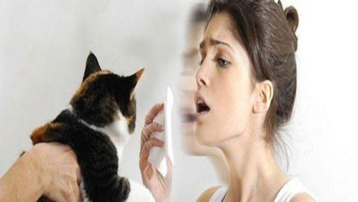 Kedi alerjisine ilaçlı tedavi