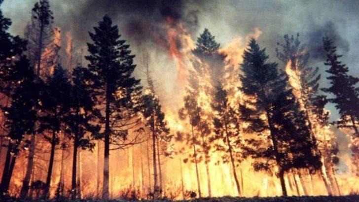 Büyükada'da orman yangını