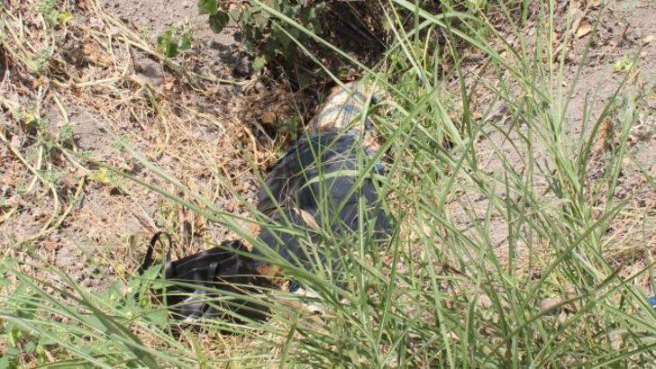 Kayıp kadının cesedi mısır tarlasında bulundu