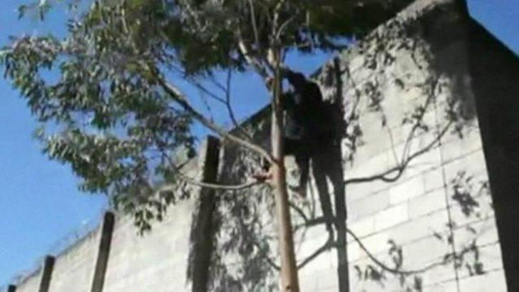 Mahkumlar ağaca tırmanarak kaçtı