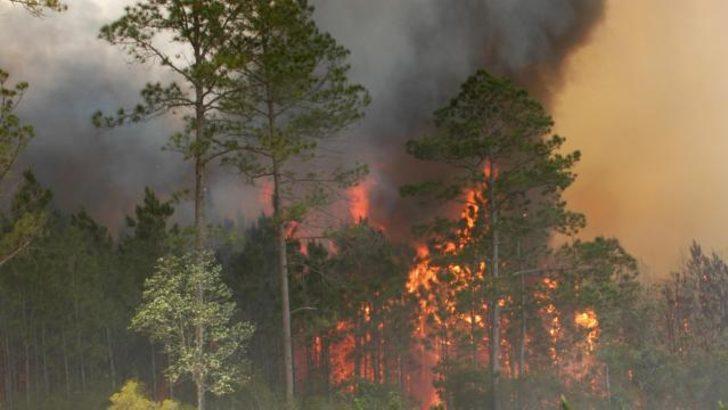 Çökertme'de orman yangını