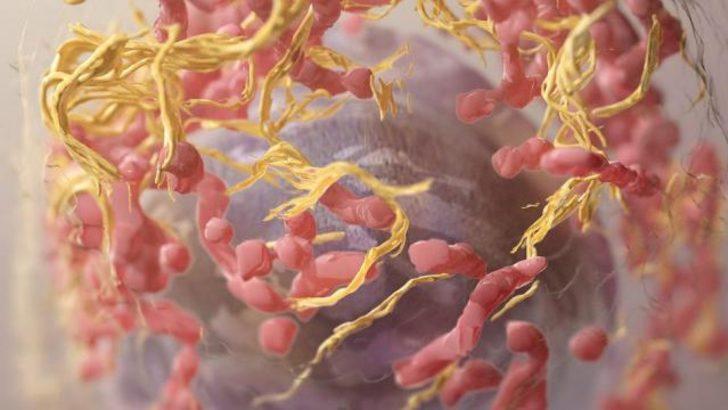 Bağışıklık sistemini kanserle savaştıracak